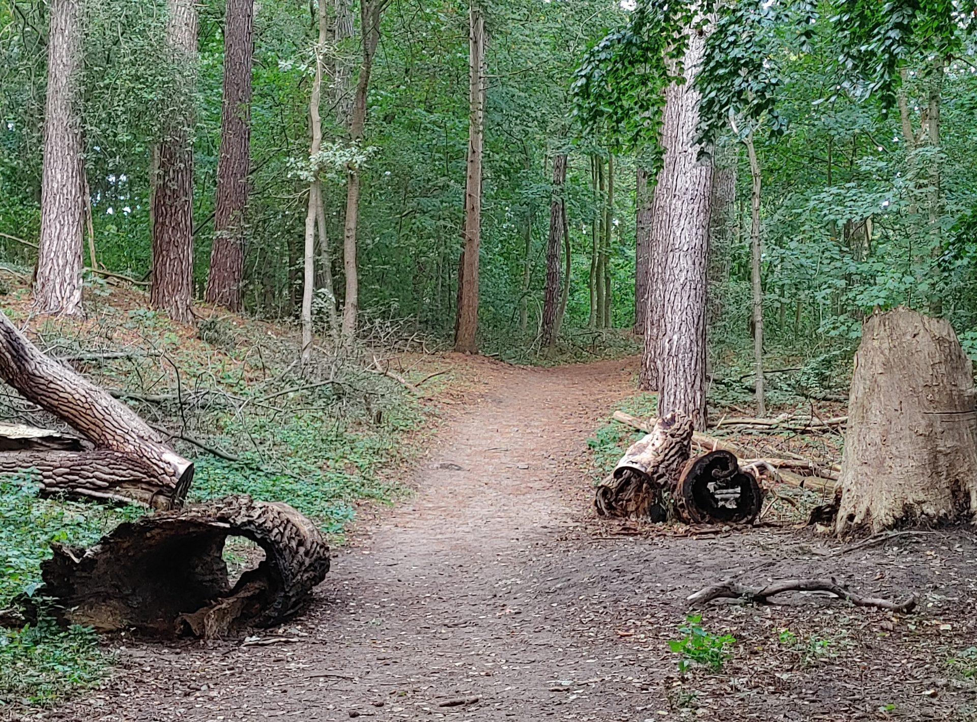 Inspiratie Uit Het Bos